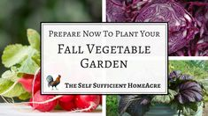 Prepare Now to Plant Your Fall Vegetable Garden - An in depth guide to the best vegetables to plant, growing conditions, and how to store the harvest! Autumn Garden, Easy Garden, Harvest Garden, Garden Tips, Fall Plants, Green Plants, Potted Plants, Broccoli Raab, Fall Crops