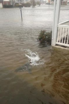 An amazing photo of a shark in New Jersey shore, swimming in a flooded street caused by hurricane Sandy! Just amazing!