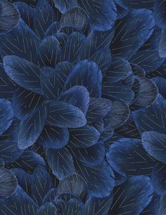 Dark Blue Feathers - Timeless Treasures - Half Yard