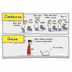 Tem dias que eu fico meio gato, mas, em geral, sou cachorro... :)   #comportamento #atitude #humor