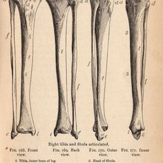Click on images to enlarge For the Full size Printable PDF click HERE For the Full size Printable PDF click HERE You may have seen these before, I originally posted these several years ago. Recently Pottery Barn came out with some fabulous canvas wall hangings, for Halloween, using these exact same Bone and Skull images!...Read More »