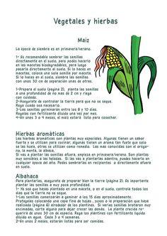 Plantar maiz y  hierbas aromáticas