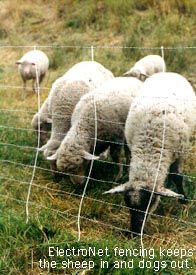Invasive Weeds: Grazing Weeds with Sheep