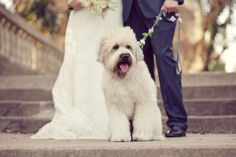 I love how the picture is about the dog. The couple just make him look good. ;)