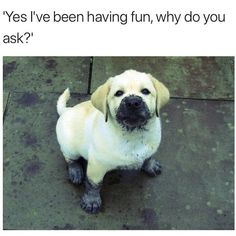 25 Funny Animal Photo Puppy Pictures, Cute Pictures, Cute Baby Animals, Funny Animals, Labrador Quotes, Pusheen Cute, Animal Jokes, Animal Funnies, Funny Animal Photos
