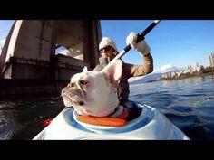 Dog-Kayaking in Vancouver, British Columbia