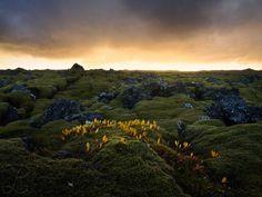 Apocalypse Now by da-phil