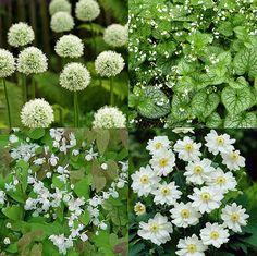 De mooiste borderplanten door Lieven Gekiere   MijnTuin.org