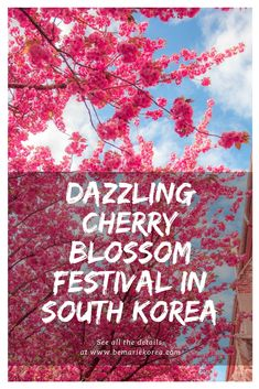 The cherry blossom festival in Gyeongju is something you can't miss when travelling in South Korea. It is one of the most visited festivals in Korea!