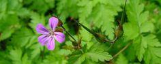 Nature Today | Zo krijgen bloemen hun kleur