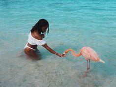 Aruba-flamants-roses