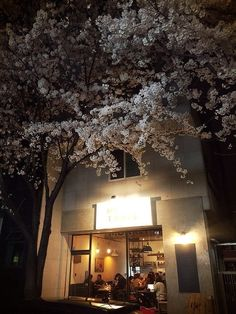Blooms around the world: readers' cherry blossom pictures
