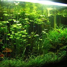 Properly Maintaining the pH in a Freshwater Aquarium | RateMyFishTank.com