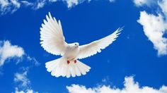 The white dove is a symbol of the holy spirit. The holy spirit came down as a dove during Jesus' baptism, and it is a symbol of empowering all people being baptized. The Holy Spirit accompanies us along our faith journey.