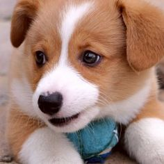 The Most Popular Dog Names of 2014