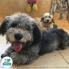 Cuties 😍 @wetnosepet #PETica  *  *  *  *  *  #funnydog #funnypuppy #instafun #cutedog #cutepuppy #ljubimac #ljubimci #kucniljubimci #kucniljubimac #dogsofserbia #mezimac #mezimci #bestdog #ilovedogs #doglover #dogloversclub #lovedogs #puppies #dogs