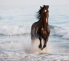 Stallion Leaps In The Surf Fine Art Horse Photograph - Items Similar To Stallion Leaps In The Surf Fine Art Horse Photograph Horse Andalusian Fine Art Print On Etsy A Bay Azteca Stallion Splashes Through The Surf In Ojai California Horse Water Ch Some Beautiful Images, Most Beautiful Horses, Pretty Horses, Animals Beautiful, Horse Water, Chincoteague Ponies, Horse Wall Art, Running On The Beach, Equine Art