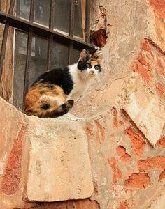 http://www.kittyinny.com/blog/cat-basic-care-tips