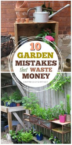 If you want to make the most of your money and have the best possible garden without going over budget, these tips will help. It's advice from experienced gardeners who have been there, wasted that!