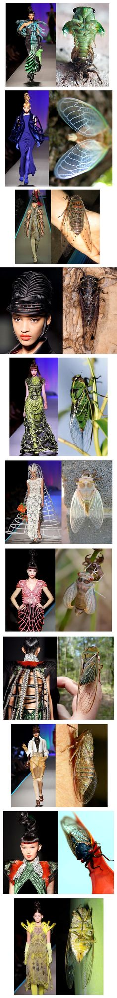 Jean Paul Gaultier—Given the cicada's amazing ability to transform itself by emerging from it's former self into something amazing, it's not hard to draw the correlation between Gaultier's attempt to take something old and dated by breathing new life into it. I say, bravo Jean Paul.