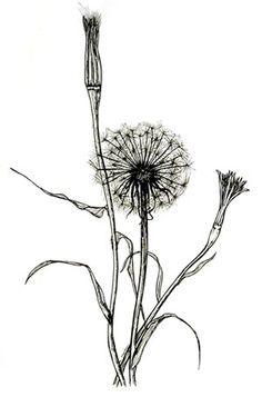 botanical illustration black and white - Google Search