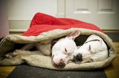 how to make a dog sleeping bag bed