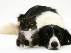 Aw dog and cat in harmony, the way it should be