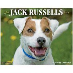 Just Jack Russells 2015 Calendar $11.99