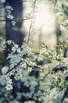 Find images and videos about white, nature and flowers on We Heart It - the app to get lost in what you love. Spring Nature, All Nature, Flowers Nature, Good Morning Cards, Good Morning Images, White Flowers, Beautiful Flowers, Spring Flowers, Pretty Pictures