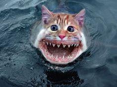 The very rare - kitty shark, endangered shark