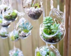 This listing is for 10 hand blown glass terrariums for your wedding or garden party.They can be hung for a beautiful display. Rope included Each Terrariums Wedding Favors Glass Hanging 190 by uniquelywed on Etsy 35 Most Creative Succulent Wedding Ideas 7 Mini Terrarium, Hanging Terrarium, Hanging Succulents, Glass Terrarium, Succulent Terrarium, Succulents Garden, Terrarium Wedding Favor, Succulent Wedding Favors, Plastic Bottle Crafts