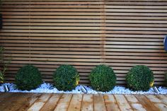 Buxus balls in low maintenance London garden design