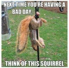 Squirrel hung by the balls