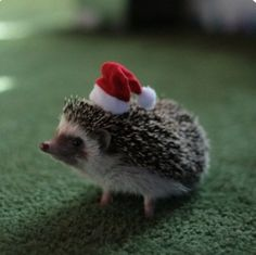 No elf ever told the little hedgehog that his hat didn't work, they just politely pretended to like getting earthworms put in all their stockings...after a few years, the little hedgehog was eaten by a wolf so it all worked out....and the earthworms were happiest of all.
