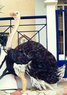 ΖΩΓΡΑΦΙΚΗ ΓΙΑΝΝΗΣ ΓΕΩΡΓΙΑΔΗΣ: ΖΩΓΡΑΦΙΚΗ ΖΩΩΝ Rooster, Birds, Painting, Animals, Animales, Animaux, Painting Art, Bird, Paintings