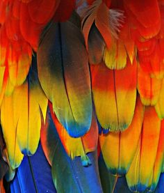 Colorful Bird Feathers <3