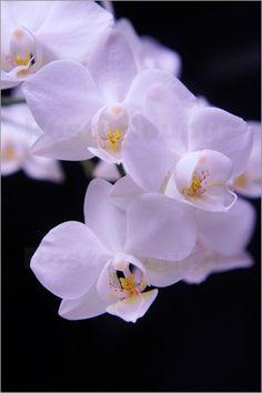 Orchideen Bilder: Poster von Emotion-Art bei Posterlounge.de