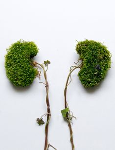 Eye Heart Spleen: Human Organs Made from Flowers and Plants by Camila Carlow