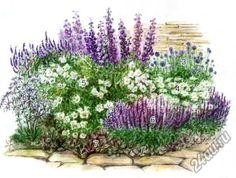 Спланирую цветник из однолетников, многолетников, а также сложный с применением древесных растений с учетом особенностей его расположения на участке.