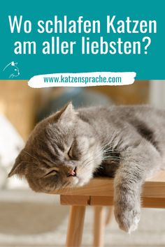 Katzen wechseln oft ihren Schlafplatz. Hierfür kommen aber nur Schlafplätze in Frage, die schön kuschelig warm und gemütlich sind. Am besten sollte der Schlafplatz auch noch höher gelegen sein, wie beispielsweise eine Fensterbank, die Liegefläche auf einem Kratzbaum oder ein Bücherregal. #katze #katzen #katzenschlafen #katzenschlaf #wohnungskatzen #katzentipps #katzenhacks #katzenverhalten #katzenschlafplatz #katzenschlafposition #süßekatzen