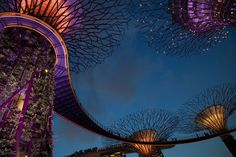 """If you ever make it to Singapore, you might want to check out the Gardens by the Bay. It is a park that recently opened (2011) and is designed to be sustainable, meaning among other things, the """"Supertrees"""" collect solar energy during the day and use it to illuminate them at night. - See more at: http://tamrontechstips.typepad.com/tamron_blog/2013/06/gardens-by-the-bay-supertree-grove.html#sthash.lC6jgzQF.dpuf"""