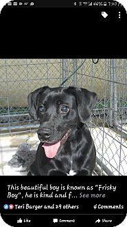 Jamestown, TN - Labrador Retriever Mix. Meet Blackie, a dog for adoption. http://www.adoptapet.com/pet/17503423-jamestown-tennessee-labrador-retriever-mix
