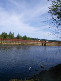 Courtenay River BC