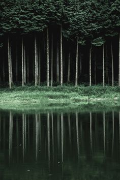Vertical line (Kameoka-shi, Kyoto Prefecture, Japan) By U3K-Y via Flickr