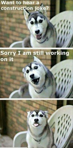 I'm saving this for the dog not the joke #funnydogquotes