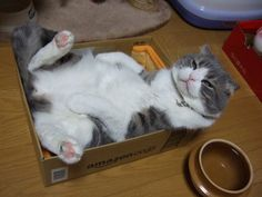 Cat laying in a box..funny..