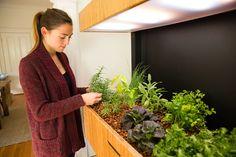 Grove écosystème - innovation - culture - potager