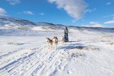 Dog Sledding in Northern Iceland 🇮🇸