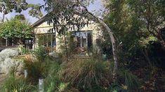 eucalyptus yard - Google Search