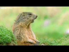 BBC One Funny Talking Animals-Walk on the wild side.  Sooooo Cute!  More about this programme:   http://www.bbc.co.uk/programmes/b00mw9t4  http://www.bbc.co.uk/comedy     Special guest species Sharon and Ozzy Osbourne impersonate gophers.